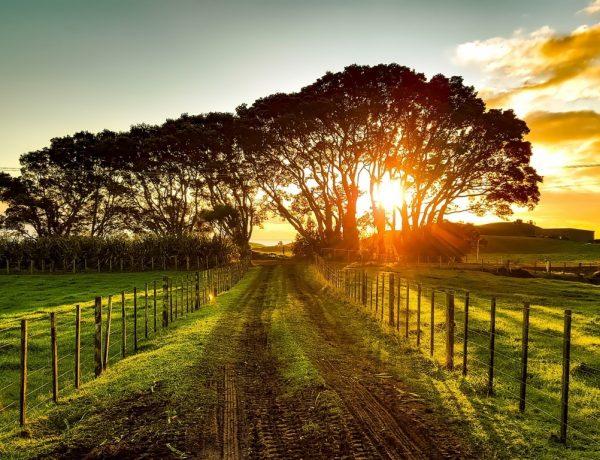 Isola del Nord Nuova Zelanda
