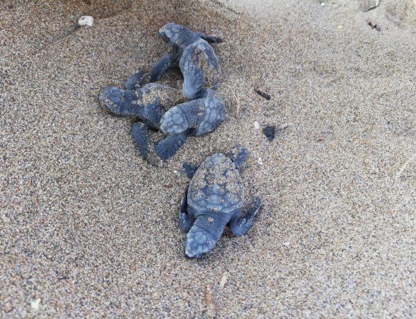 Zante tartarughe