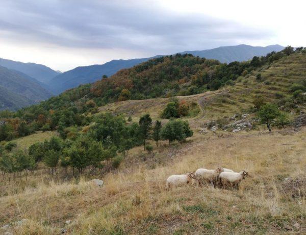 Valle Argentina Liguria